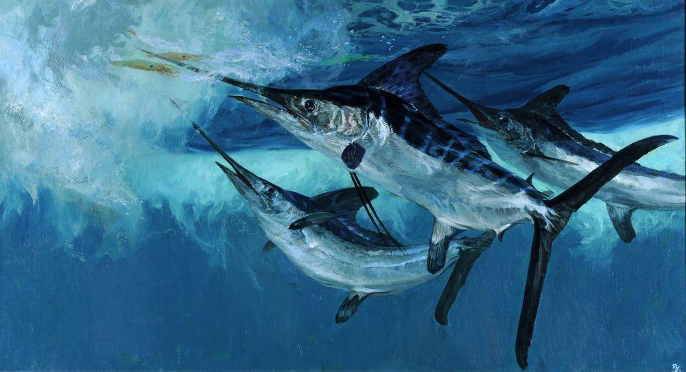 Stanley Meltzoff, White Marlin