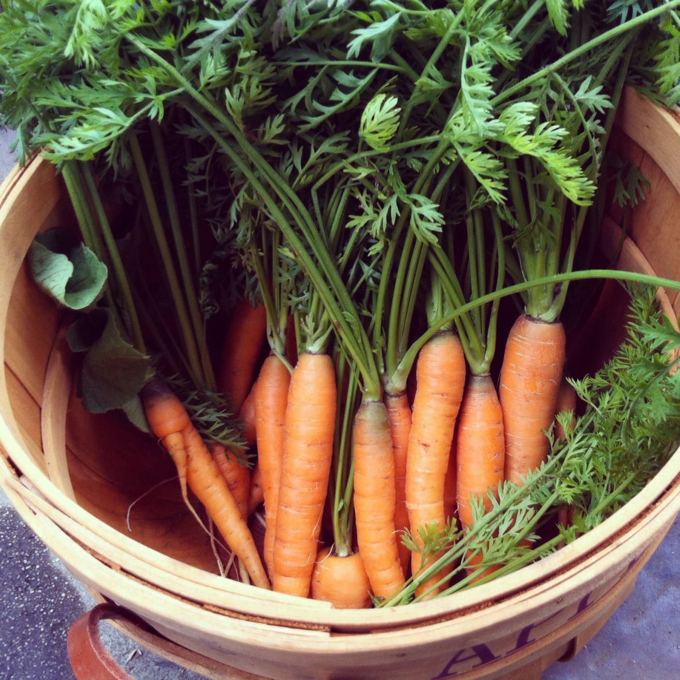 Carrots Garden Gardening Farm Farmfresh Carrots 400 x 300