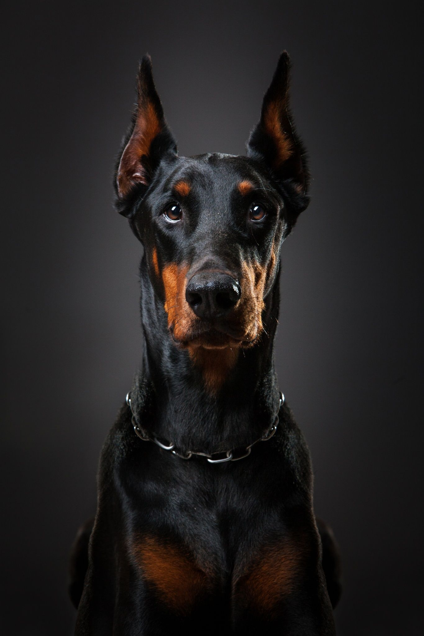 Orpheus By Lenyfoto On 500px Beautiful Doberman Doberman