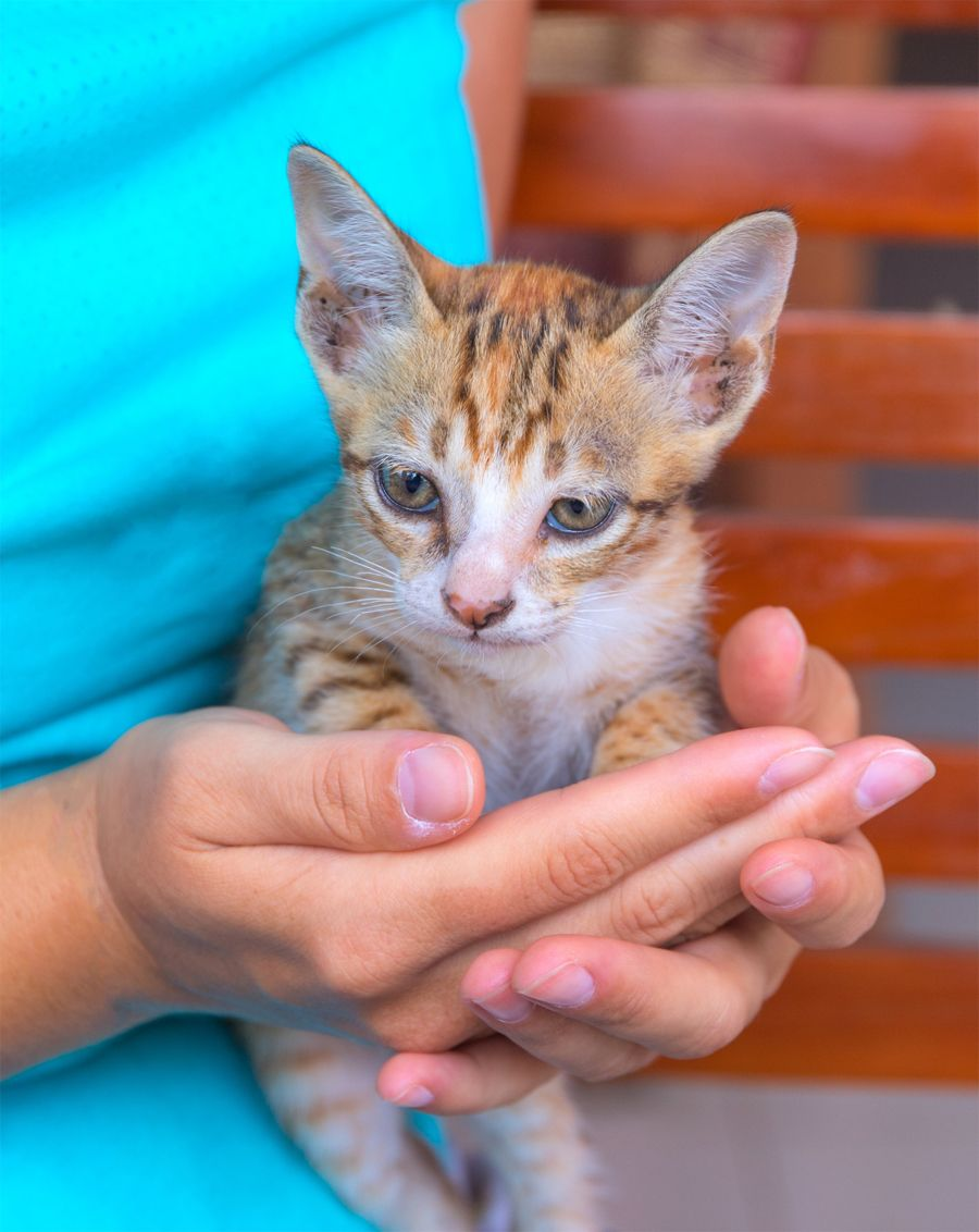 What Does Helping Shelter Animals Mean To You In 2020 Animal Shelter Animals Cat Facts