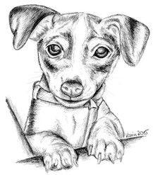 Welpe Jack Russell Terrier Hund Haustier Bleistiftzeichnung
