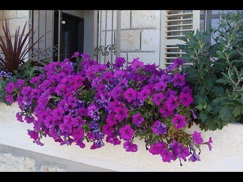 balcones floridos video 1 de 2