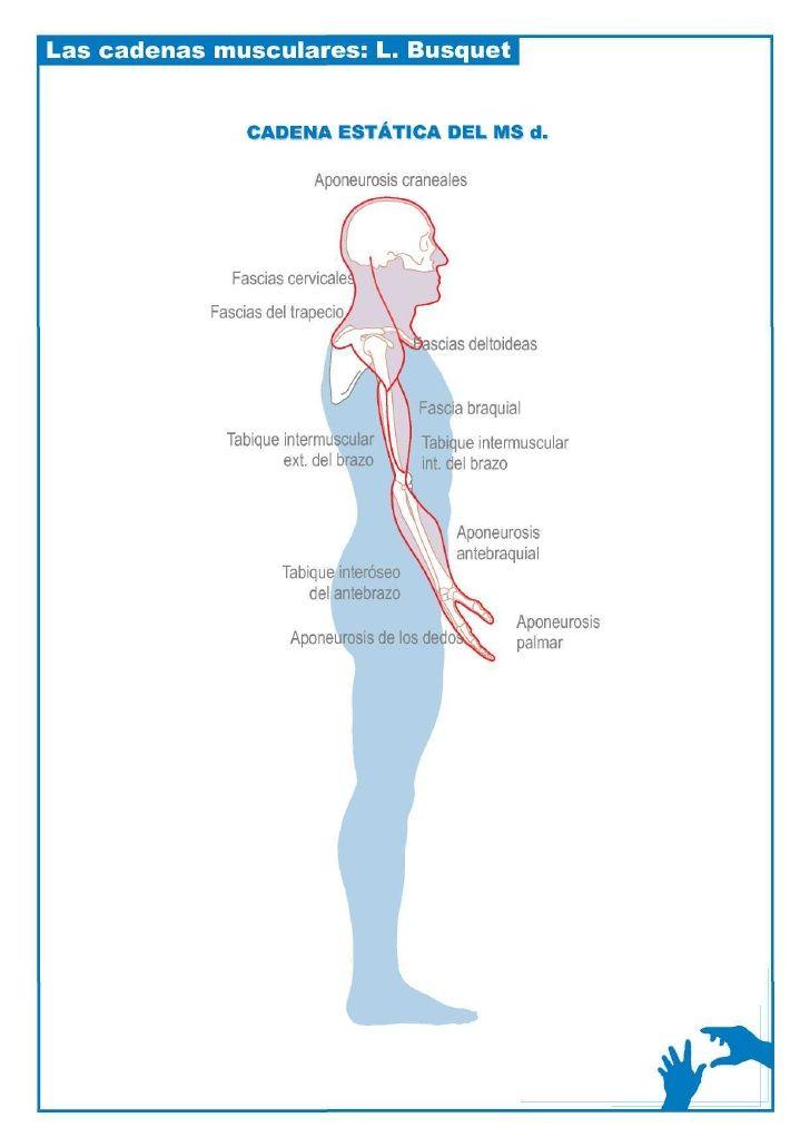 Esquemas cadenas musculares | osteopatia | Pinterest | Esquemas ...