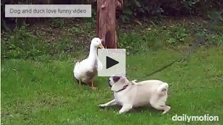 Dog and duck love funny video Funny gif, Dogs, Funny