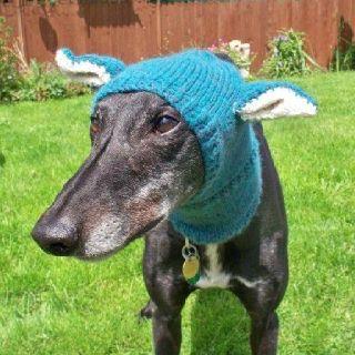 From Greyhound Friends Uk With Images Greyhound Adoption Greyhound English Bulldog Puppy