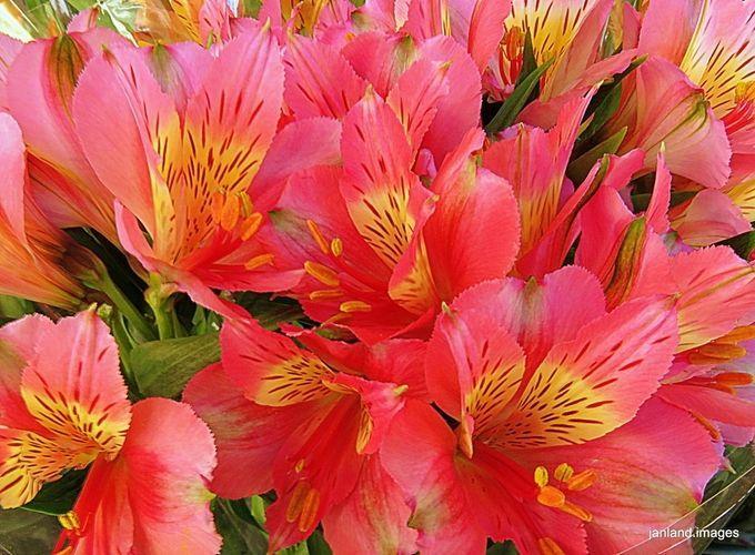 Bright Beauties by janland - ViewBug.com