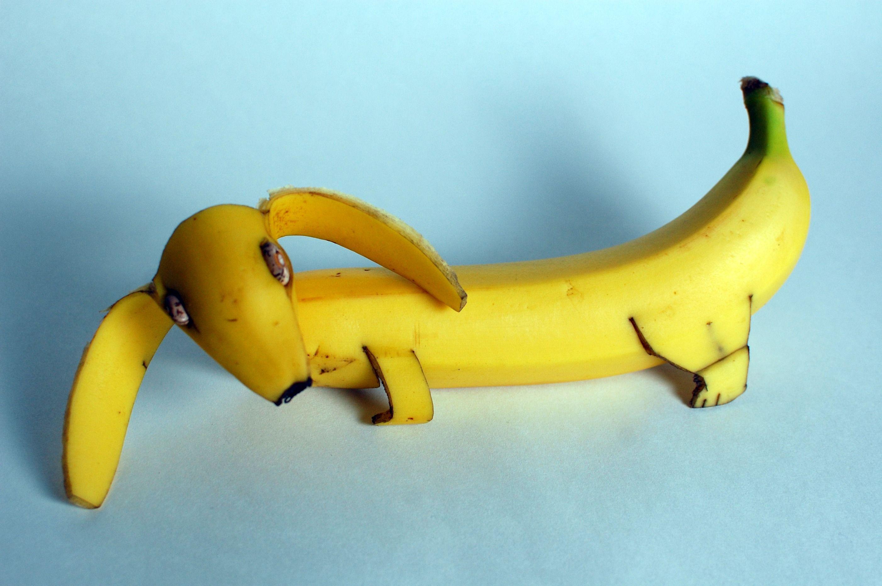 английской картинки собака из банана последующие чревосечения