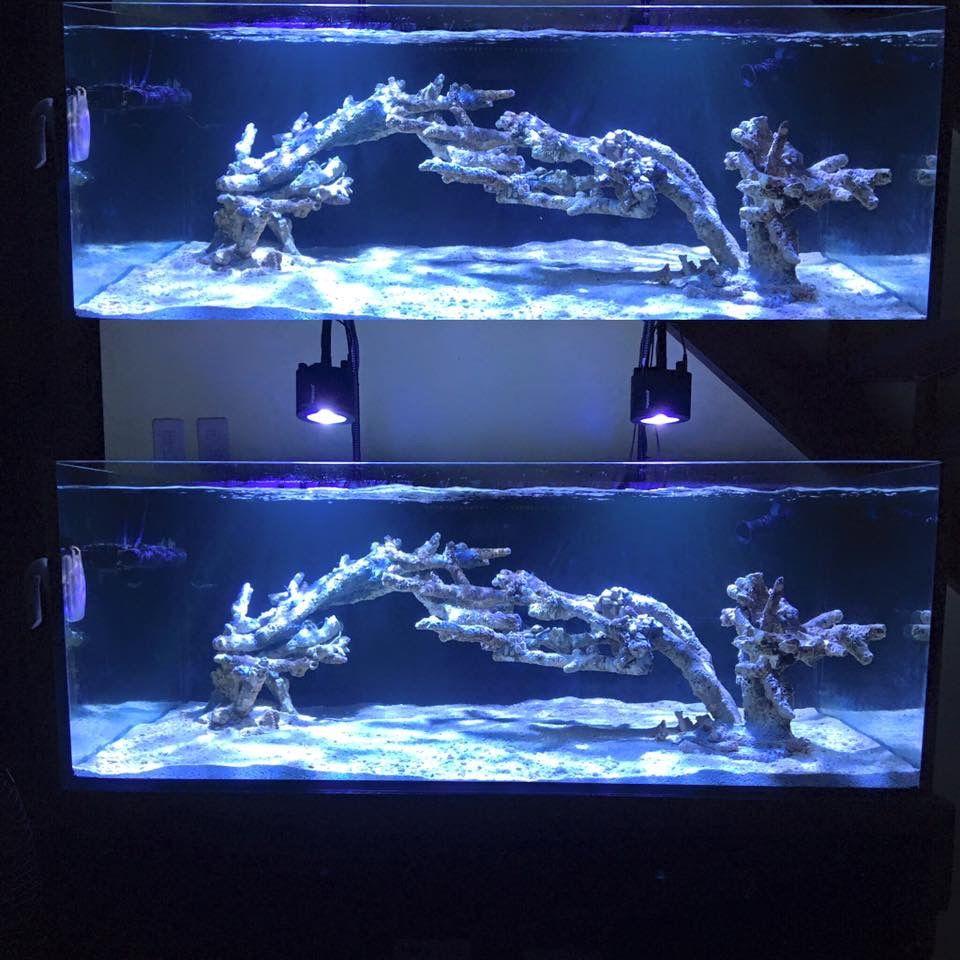 pin von nalu webb auf reef tanks pinterest meerwasser. Black Bedroom Furniture Sets. Home Design Ideas