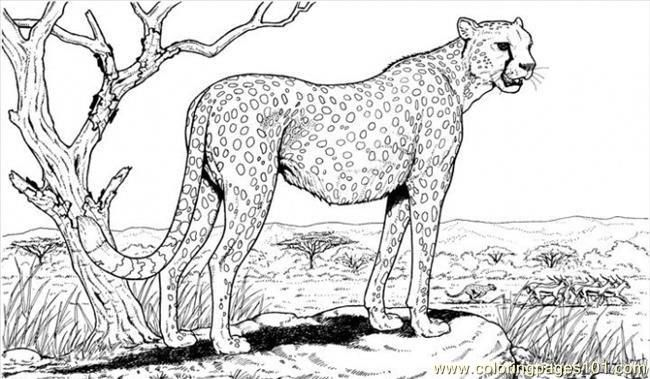 Cheetah Pictures Animal Coloring Pages Adult Coloring Pages