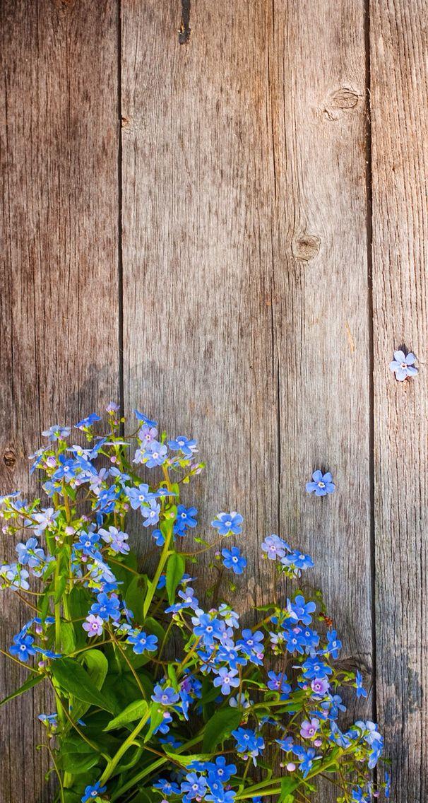 Wood & Flowers Spring wallpaper, Phone wallpaper, Pretty
