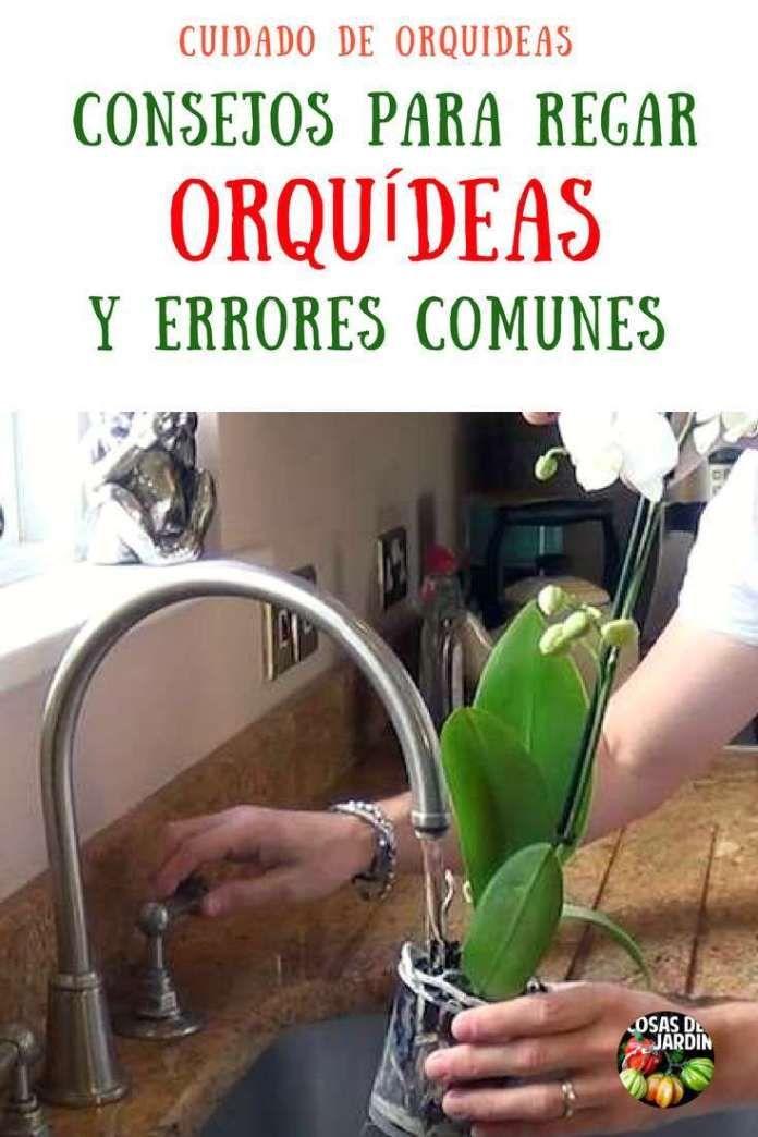 Cómo regar las orquídeas y cuáles son los principales errores que se cometen