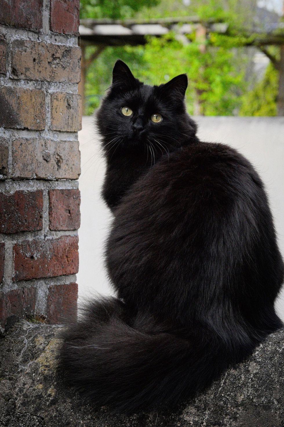20 Black Cat Names for Your Spooky or Sweet Feline Black