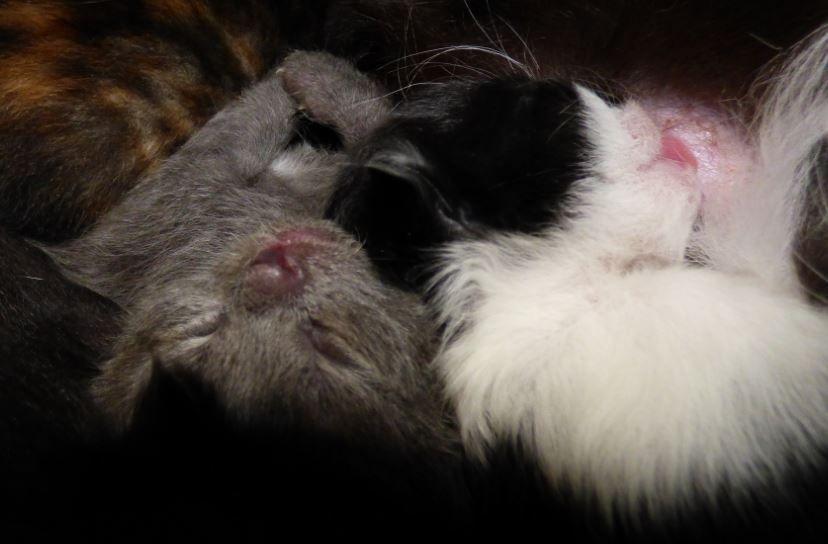 Schlafen macht schön - Foto: S. Hopp