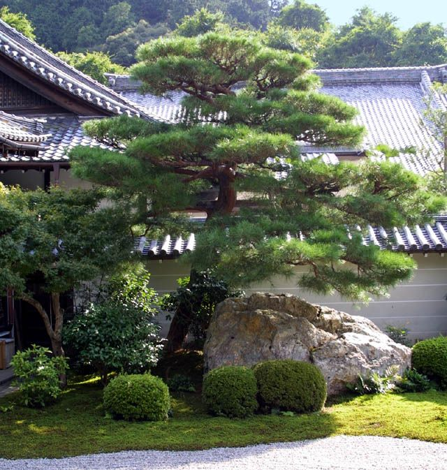 Japanese Gardens - Elements - Trees 1 | Japanese garden ...