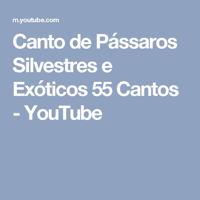 Canto de Pássaros Silvestres e Exóticos 55 Cantos - YouTube | Canto ...