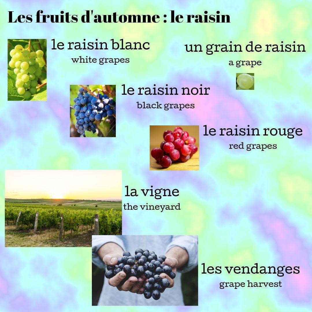 Vocabulaire Raisin Automne French Vocabulary Teacher Moments Teaching [ 1080 x 1080 Pixel ]