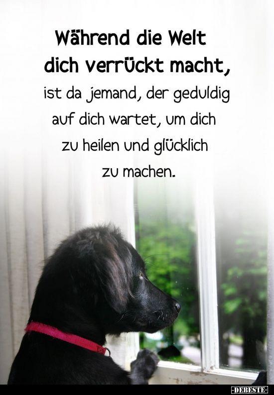Photo of Während die Welt dich verrückt macht.. #whatkindofdog Während die Welt dich v…