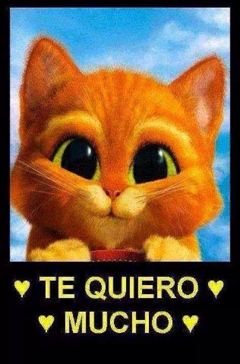 Te Quiero Mucho Frases Favoritas Pinterest Amor Frases Y