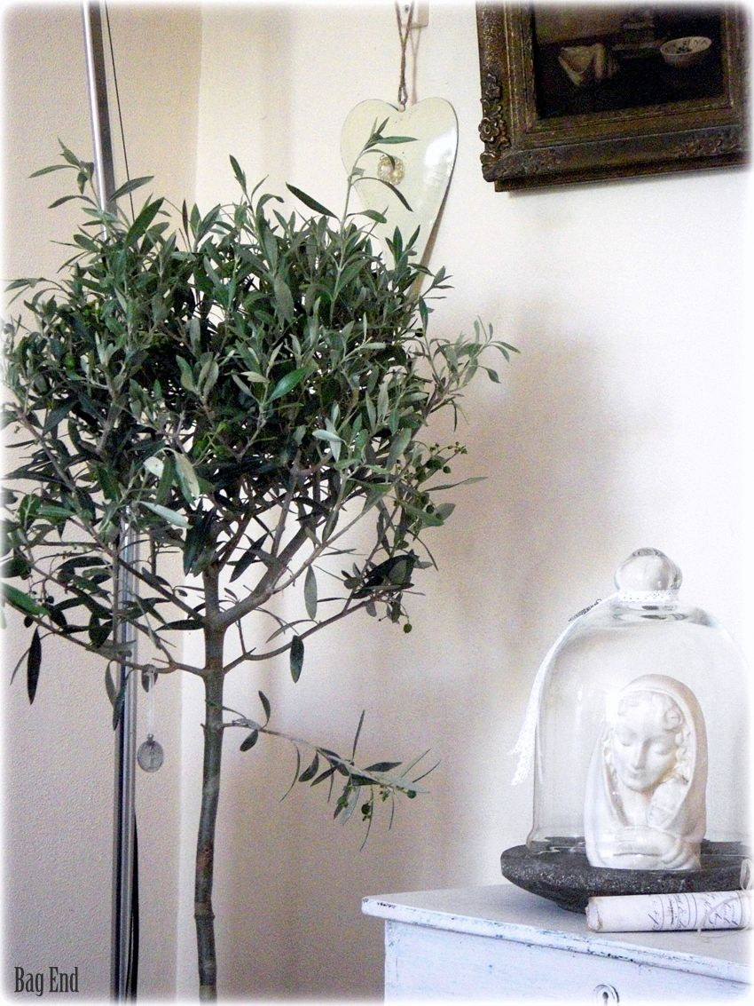 Olive tree and Madonna