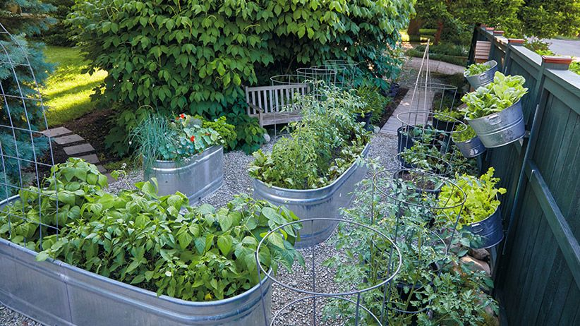 How to Grow Vegetables in a Galvanized Raised Garden Bed