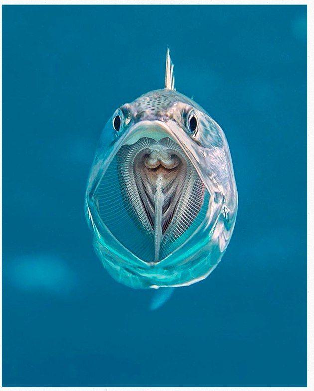 Новости  unterwasser tiere tiefseetiere wassertiere