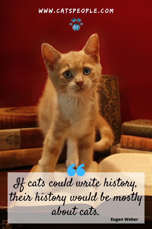 Cat Quote In 2020 Cat Quotes Cats Cat Parenting