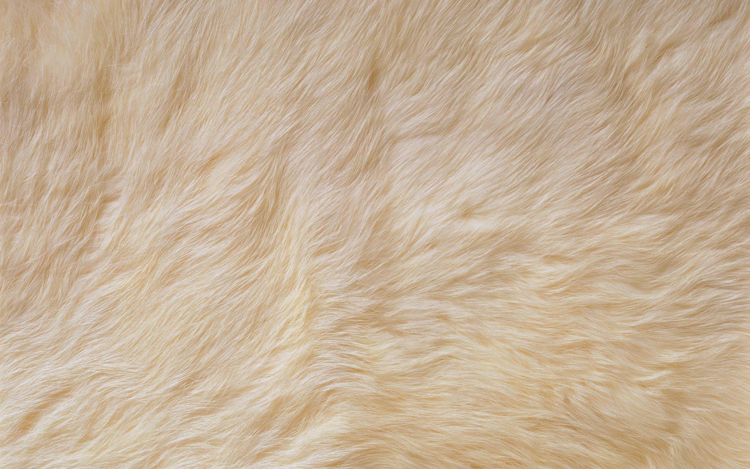 white fur texture Google Search Fur/Carpet Texture