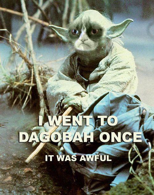 Grumpy Cat As Yoda Grumpy Cat Yoda Cat Star Wars Humor