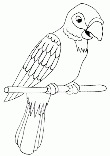 Imagen De Loro Para Colorear Busqueda De Google Coloring Pages Cartoon Color
