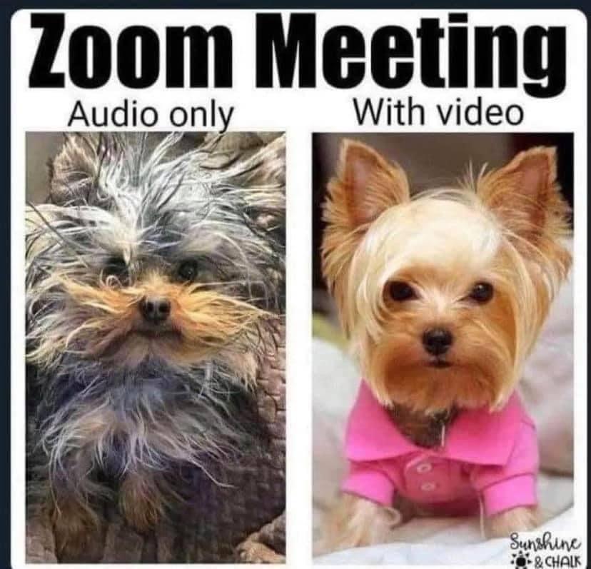 Zoom Meeting Meme Meetings Humor Meeting Memes Class Memes