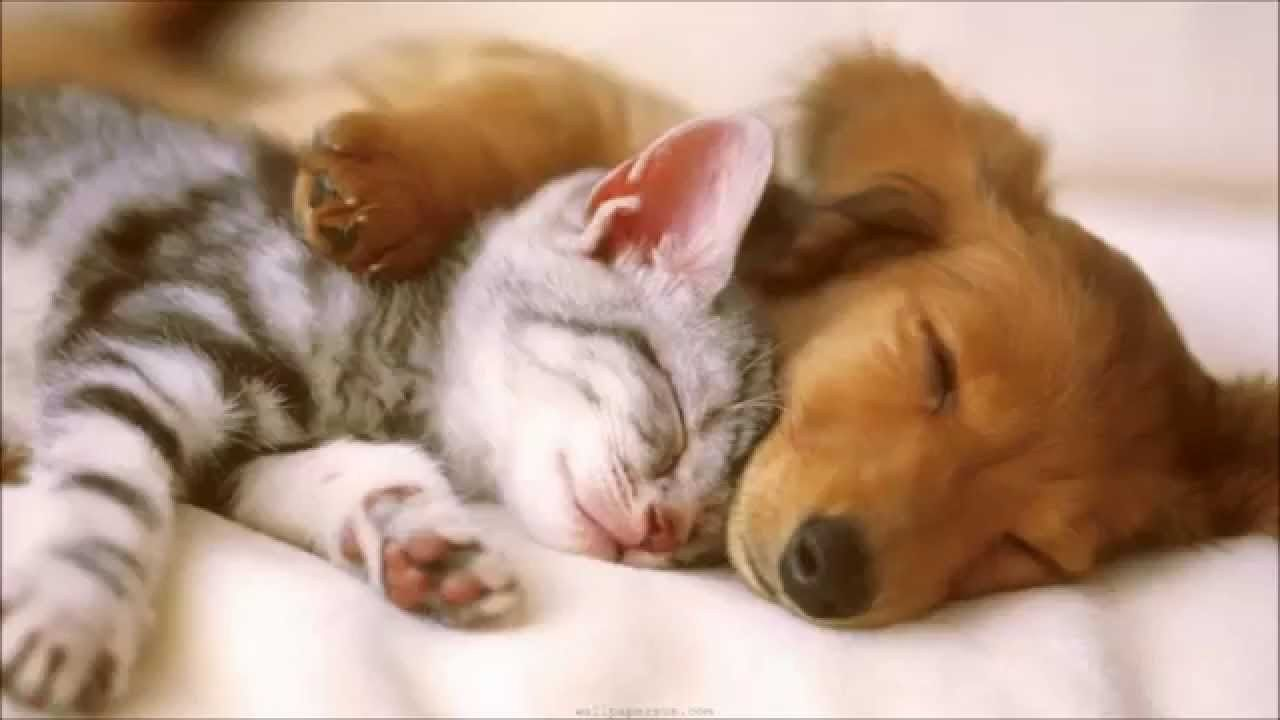Cute catsu love for big dogs definition of love sweetest things