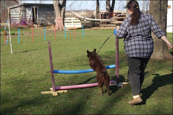 Homemade Dog Agility Course Diy Dog Agility Dog Agility