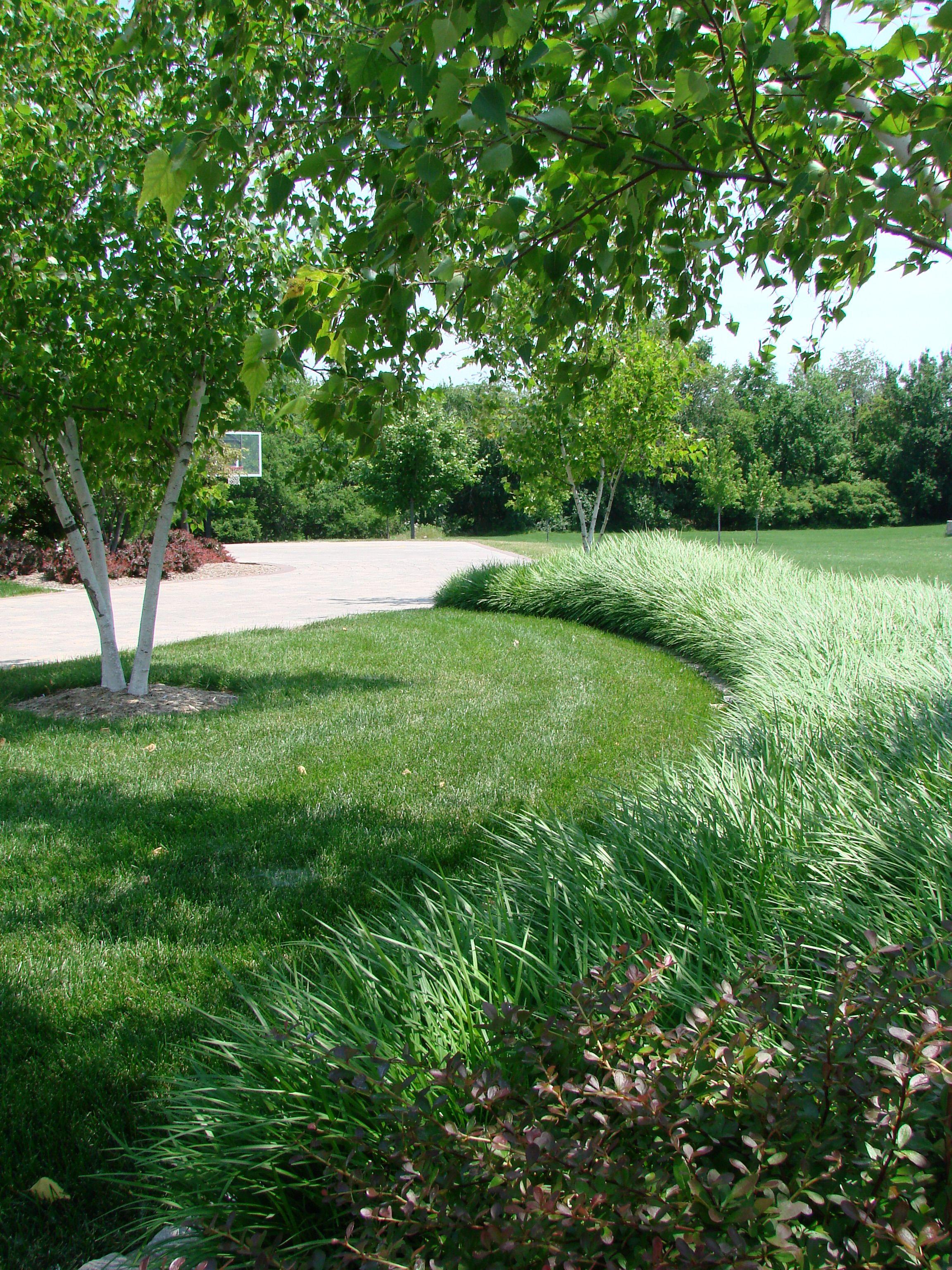 Liriope--beautiful landscspe | Liriope | Pinterest | Gardens ...