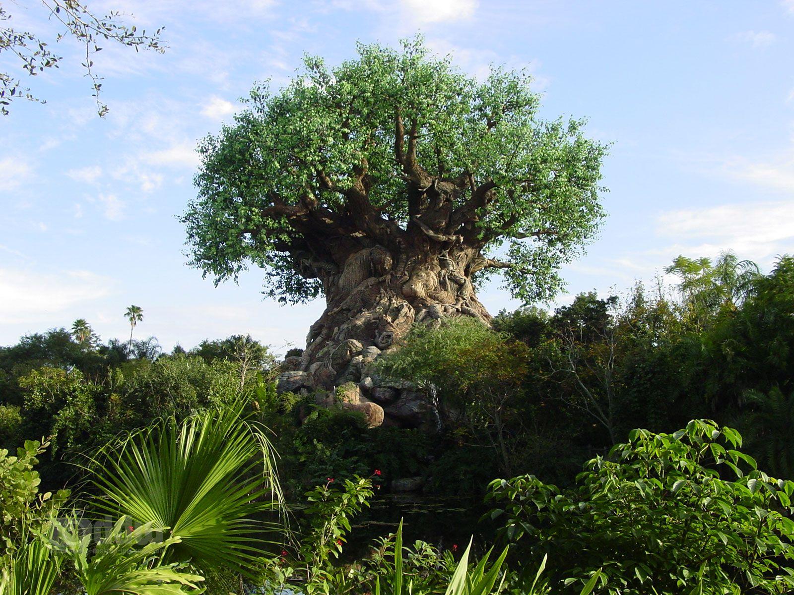 Animal Kingdom Tree Of Life Animals Of The World Animal Kingdom Orlando Animal Kingdom Disney