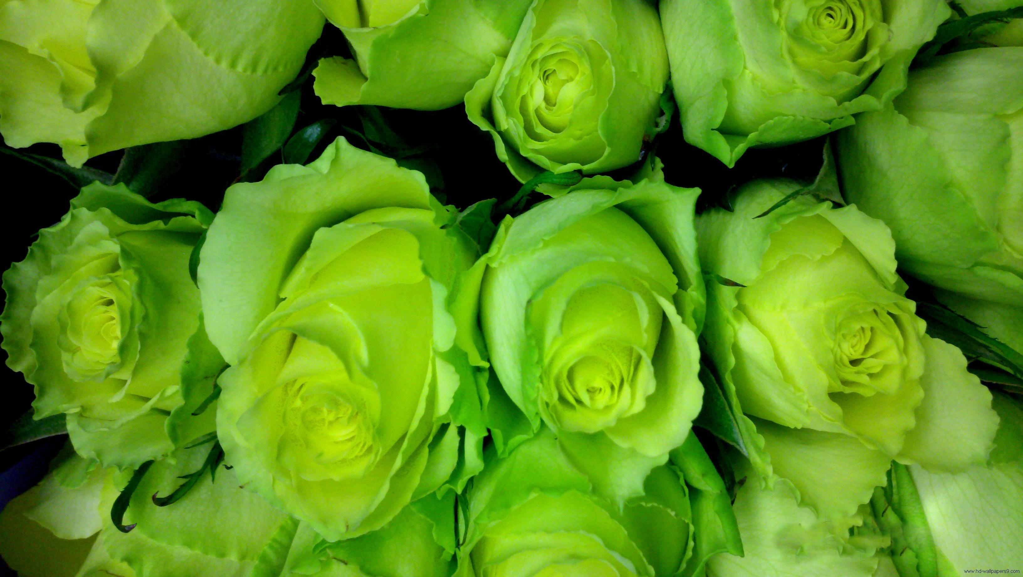 Зеленые роза доставка по украине, где купить цветы