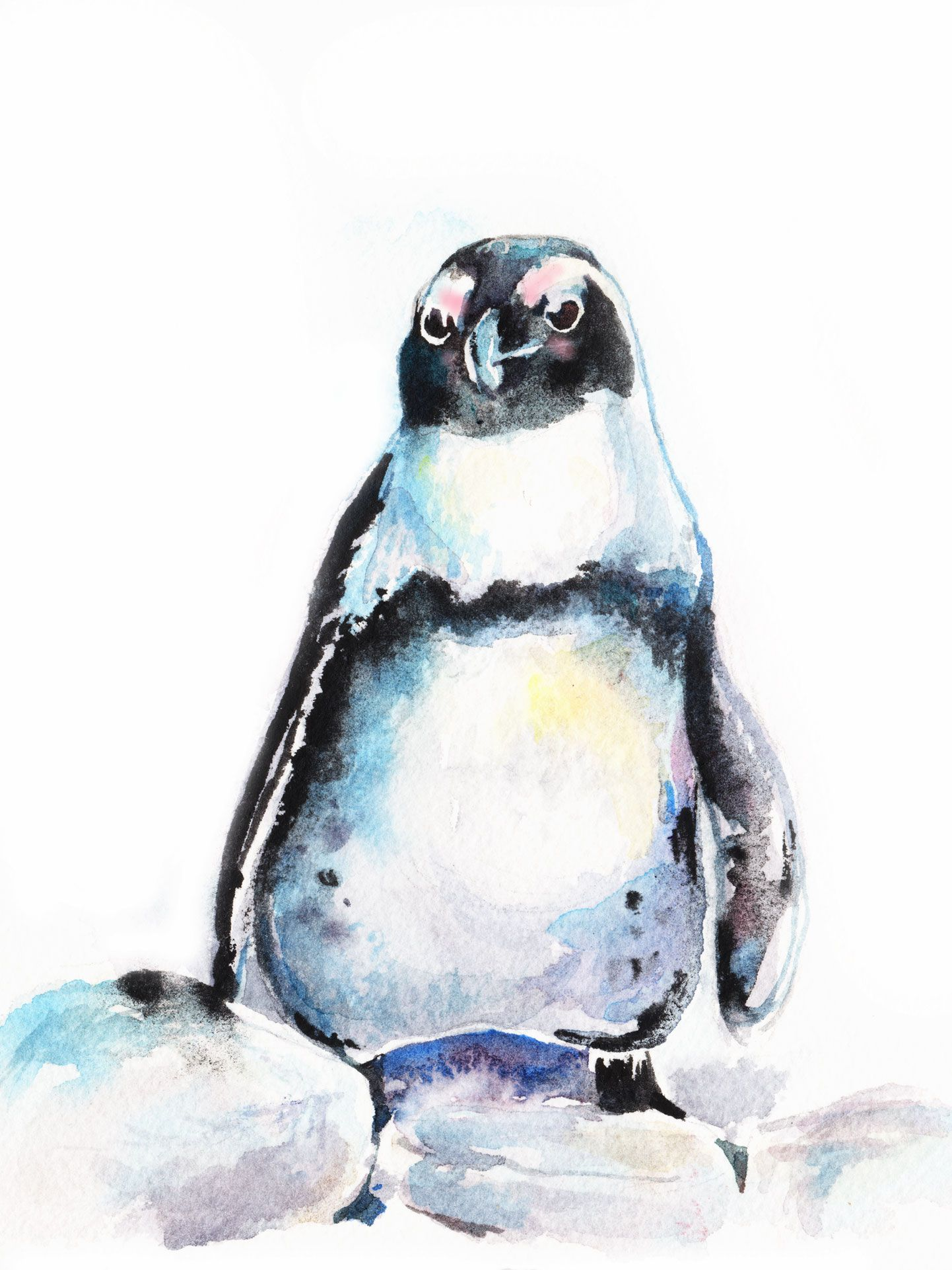 African Penguin watercolor bird painting by Christy DeKoning
