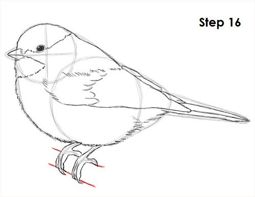 How to Draw a Chickadee