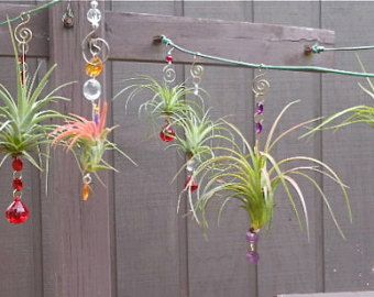 Assorted 3 pack air plant hanging window ornaments unique gift air plant hanging window ornaments assorted 3 pack easter gift mothers day spring birthday gift for mom gifts under 50 negle Choice Image