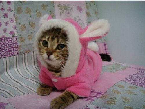 Pet clothes for dogs and cats,cute rabbit pattern, china cheap pet coats/wearing/clothes/garments supplier of free shipping