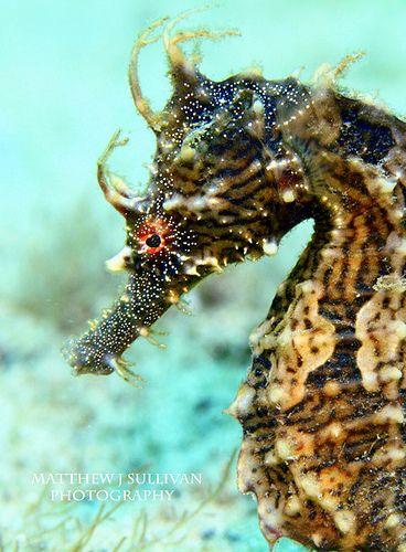 Pin On Sea Animals