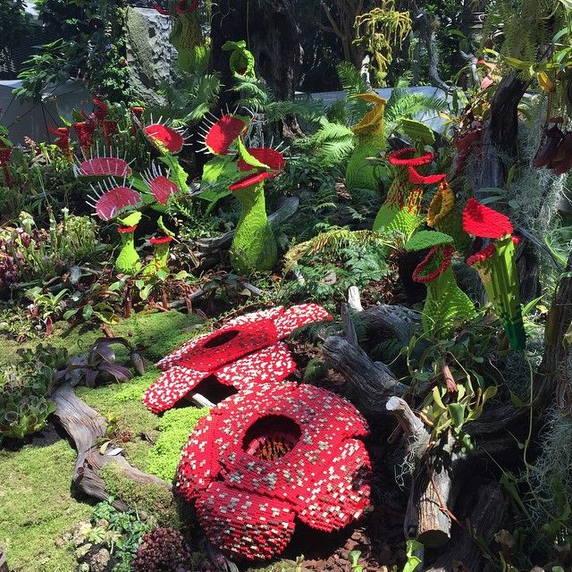 Rafflesia Venus Flytrap And Pitcher Plants Made From Lego How Cool Is That Singapore Gardensbythebay Legogram Pitcher Plant Plants Unusual Plants