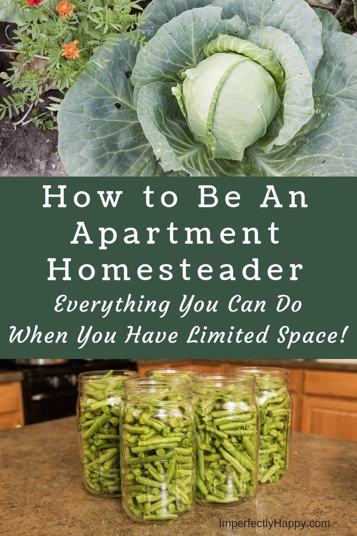 Easy Ways You Can Be An Apartment Homesteader Now is part of Apartment garden, Urban homesteading, Urban garden, Homesteading, Growing food, Grow your own food - If you live in an apartment or a condo you may think homesteading is off the table right now; I disagree  You can be an apartment homesteader!