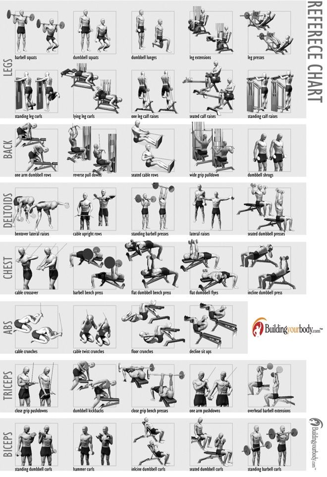 home gym exercise chart free download
