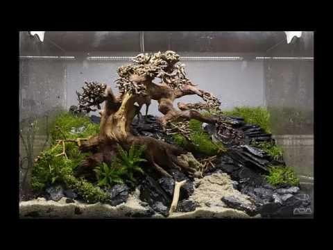 Aquarium Moss Tree Bonsai Driftwood Easy Aquascape Fresh Water Fish Tank Aquascape Aquarium