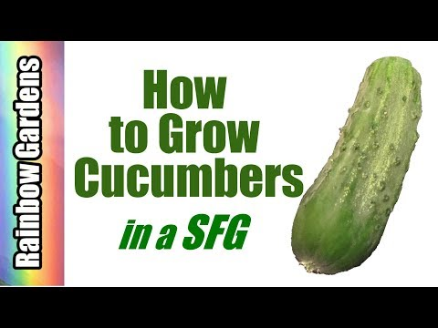 How to Grow Cucumbers in a Square Foot Garden, Plant, Trellis, Care, Problems, & Harvest!