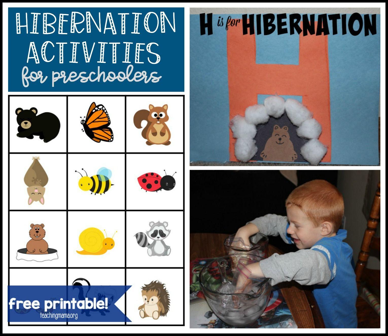 Hibernation Activities For Preschoolers Hibernation Activities Preschool Activities Hibernation Preschool Activities [ 1326 x 1530 Pixel ]