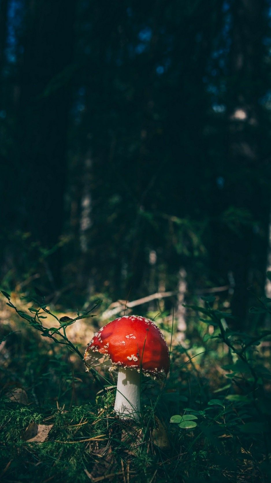 Pin by angel on Лес | Stuffed mushrooms, Types of forests