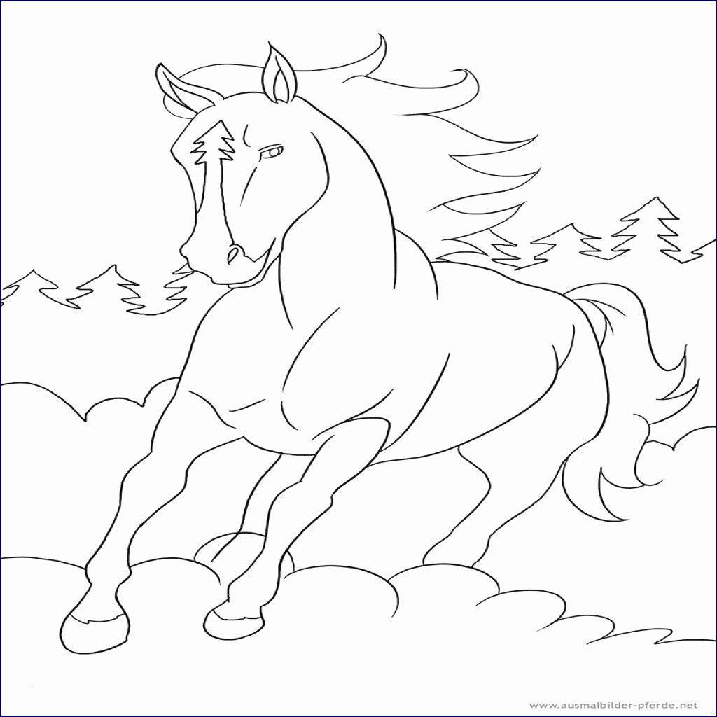 56 Einzigartig Ausmalbilder Ostwind Fotos Malvorlagen Tiere Ausmalbilder Malvorlagen Pferde
