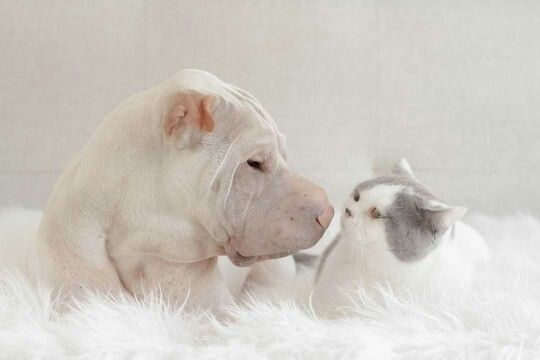 Bisous....
