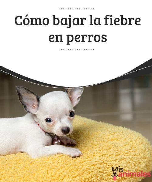 300 Ideas De Mi Perros Perros Mascotas Perros Mascotas